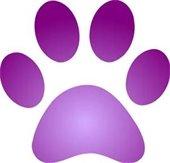 Dog n Cat